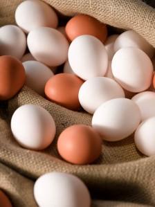 Egg_Leaf-9