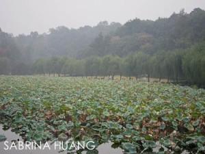 Hangzhou-22