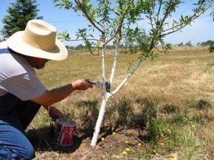 Treepaint