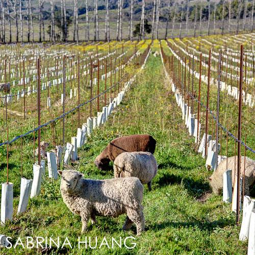 20120306Mendocino159_60_61