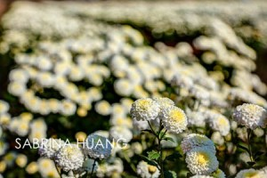 20121109Taiwan001_2_3