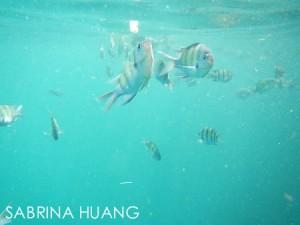 20121119Snorkeling008
