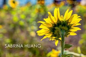 20121109Taiwan022_3_4