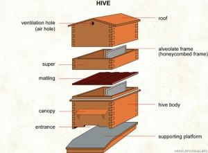 043 Hive